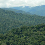 bosque san lorenzo